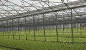 Agri / Horticultura / Acuicultura